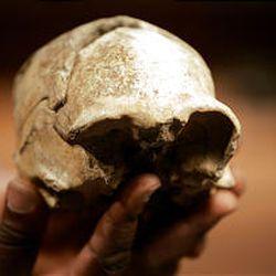 Jawbone Skull