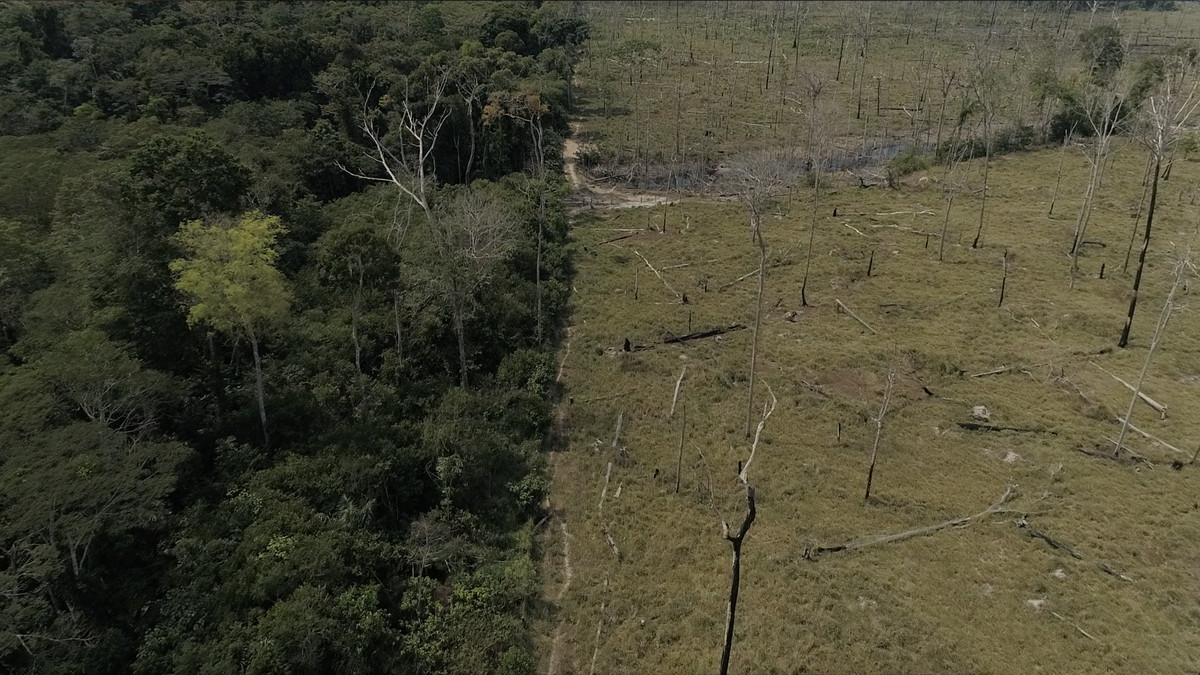 Amazon Rainforest Deforestation The Amazon Is In Trouble Again