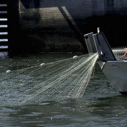FILE - In this Sept. 7, 2012, file photo, a fisherman lays out his gillnet in Young's Bay off the Columbia River in Astoria, Ore. The Trump administration on Monday, June 12, 2017, threw out a new rule intended to limit the numbers of endangered whales and sea turtles getting caught in fishing nets off the West Coast, even though the fishing industry had proposed the measure.