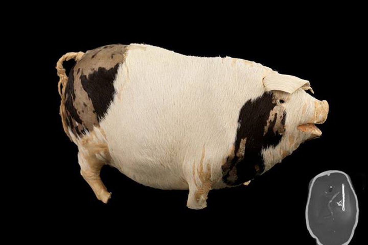 Musical toy pig from the Titanic (National Maritime Museum via Facebook)