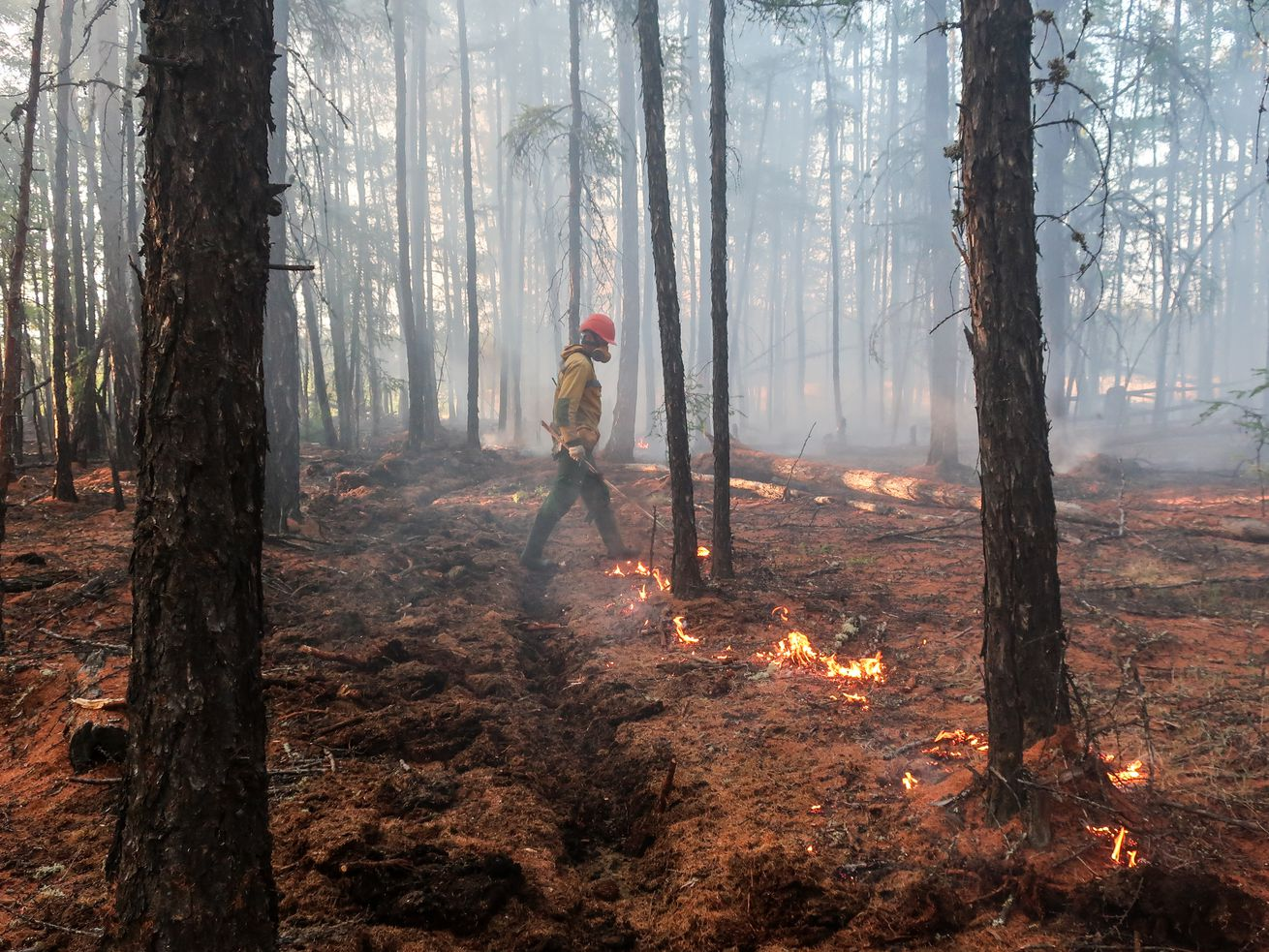 A firefighter of the Yakut Branch of the Aerial Forest Protection Service (Avialesookhrana) makes a controlled burn along a firebreak to protect a fire-prone area of the forest in central Yaktuia (Sakha Republic).