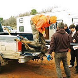 Officers at the La Sal station take tissue samples to test for CWD.