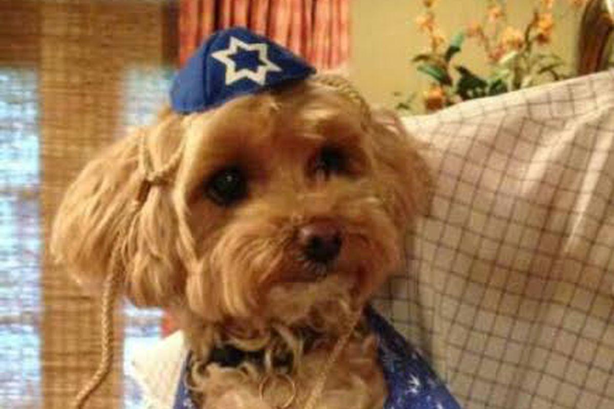 Teddy won Passover