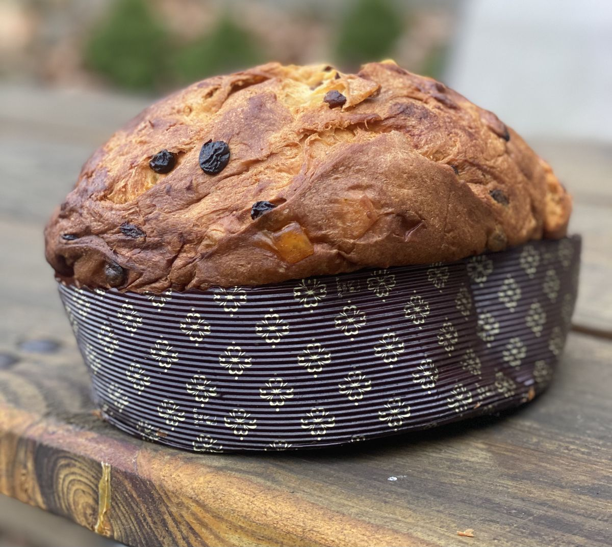 Bread & Salt's panettone sits on a picnic table; raisins and candied oranges are visible near the dome of the loaf