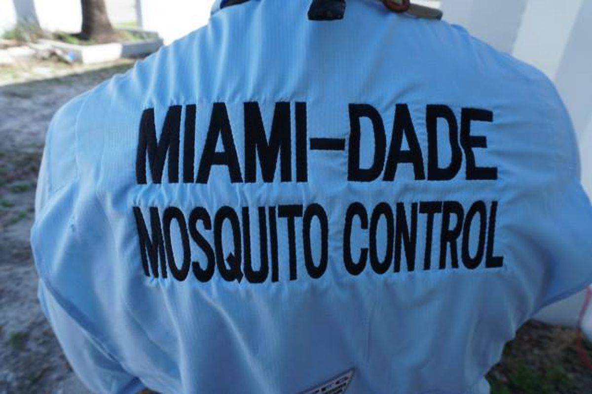Lab-bred mosquitos are Miami's newest weapon against Zika