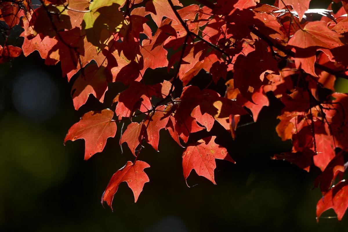 Fall Colors Autumn Leaves In Pennsylvania