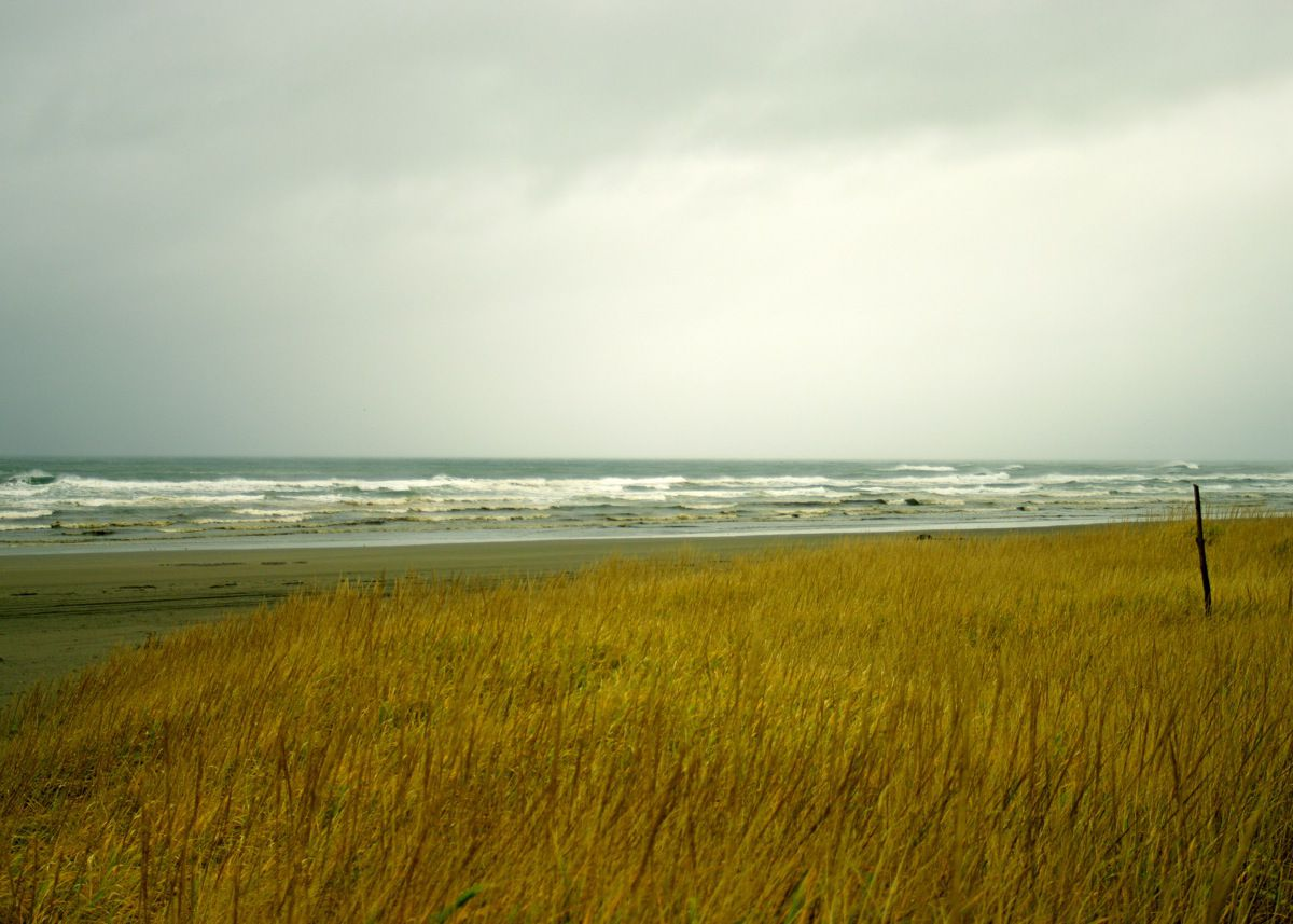 In the foreground is a field of long grass. In the distance is a beach and a body of water. There are storm clouds in the sky.
