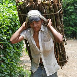 A teenage boy carries wood near Seamay, Guatemala.