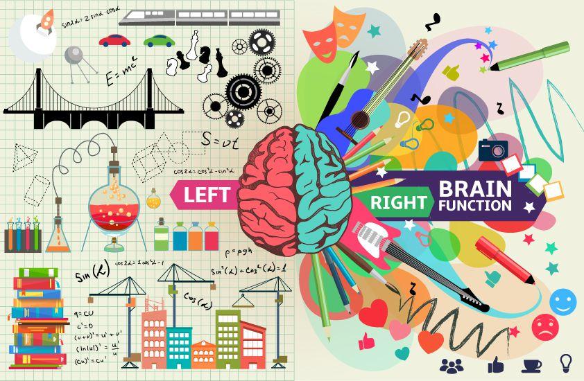 Right brain left brain hemispheres