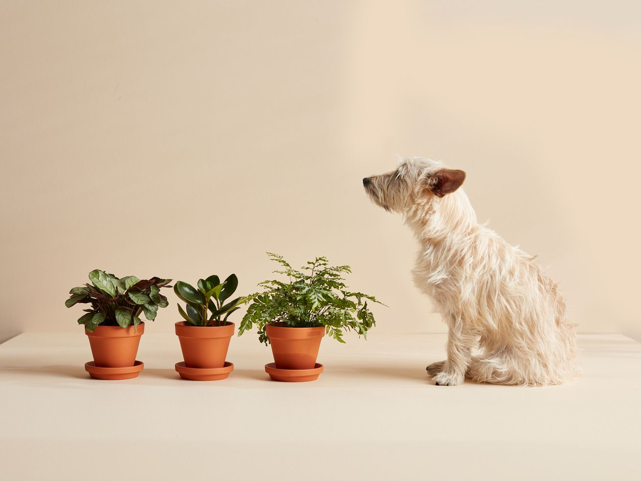 Bloomscape?s new plant bundles make it easy to fill your home with greenery