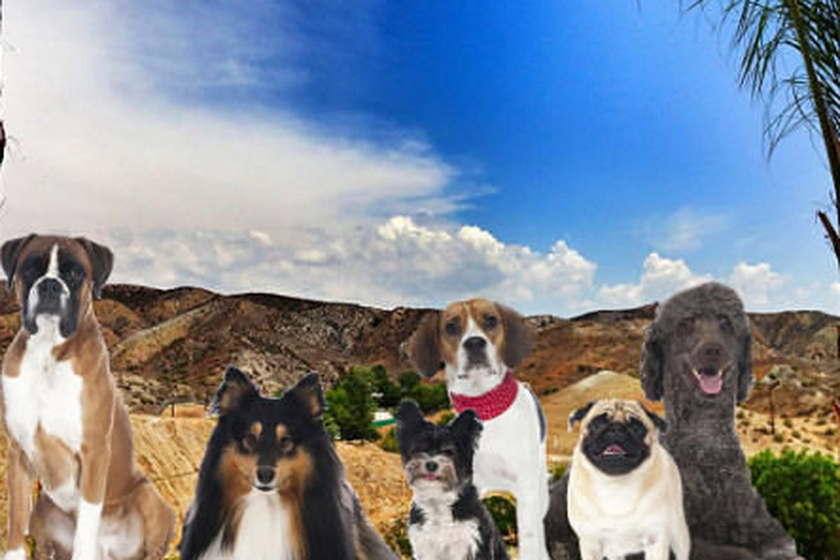 "Image via <a href=""http://la.curbed.com/archives/2014/07/cesar_millan_planning_worlds_biggest_dog_park_in_santa_clarita.php"">Curbed LA</a>"