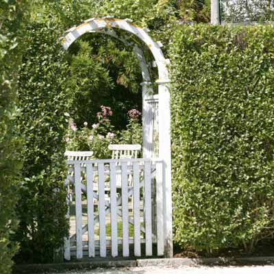 Privet Hedge With Gate