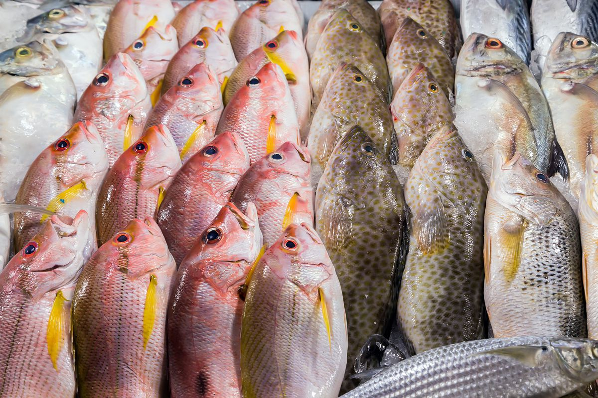 Fish line up in a display
