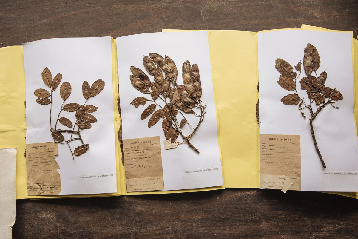 Leaf samples taped to paper.