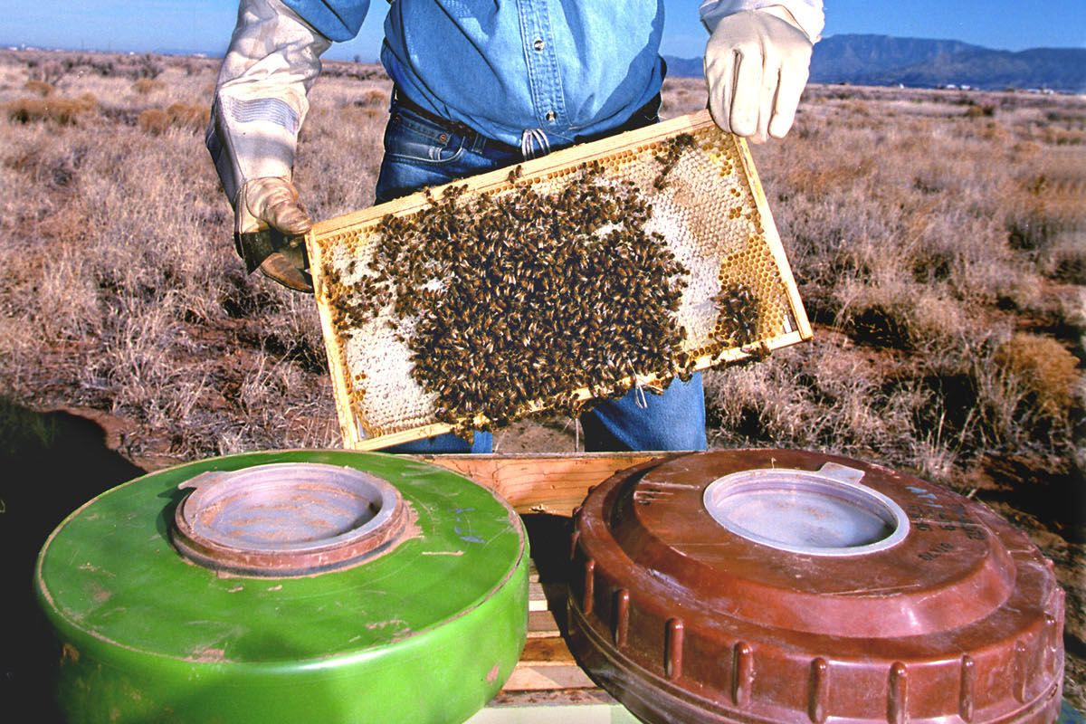 Beekeeper Holds Honeybees That Are Helping Researchers At Sandia National Laboratories And The Uni