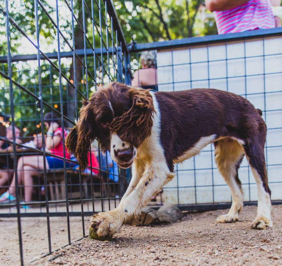 A pup at Banger's dog park