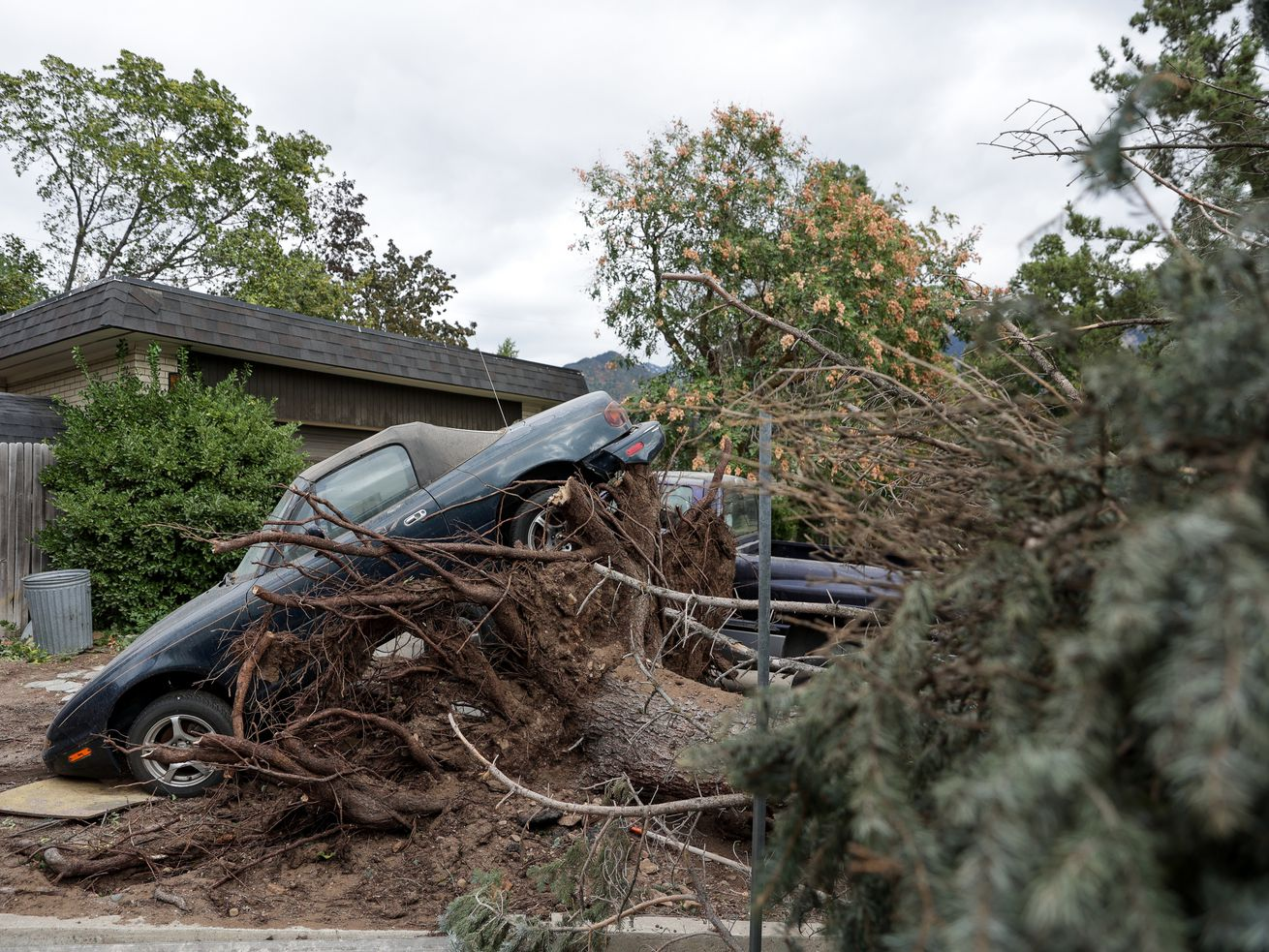 The roots of a tree felled by high winds lifted a car into the air in Millcreek on Tuesday, Sept. 8, 2020. On Wednesday, Jan. 13, the Federal Emergency Management Agency announced President Donald Trump signed a major disaster declaration on Jan. 12 for the damage done during the storm.