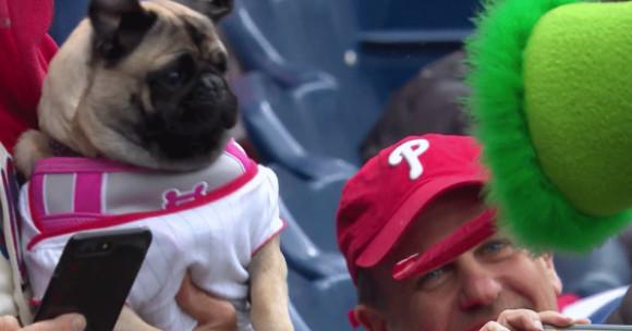 这支可怜的棒球哈巴狗被费城帕纳蒂斯的舌头吓得半死不活