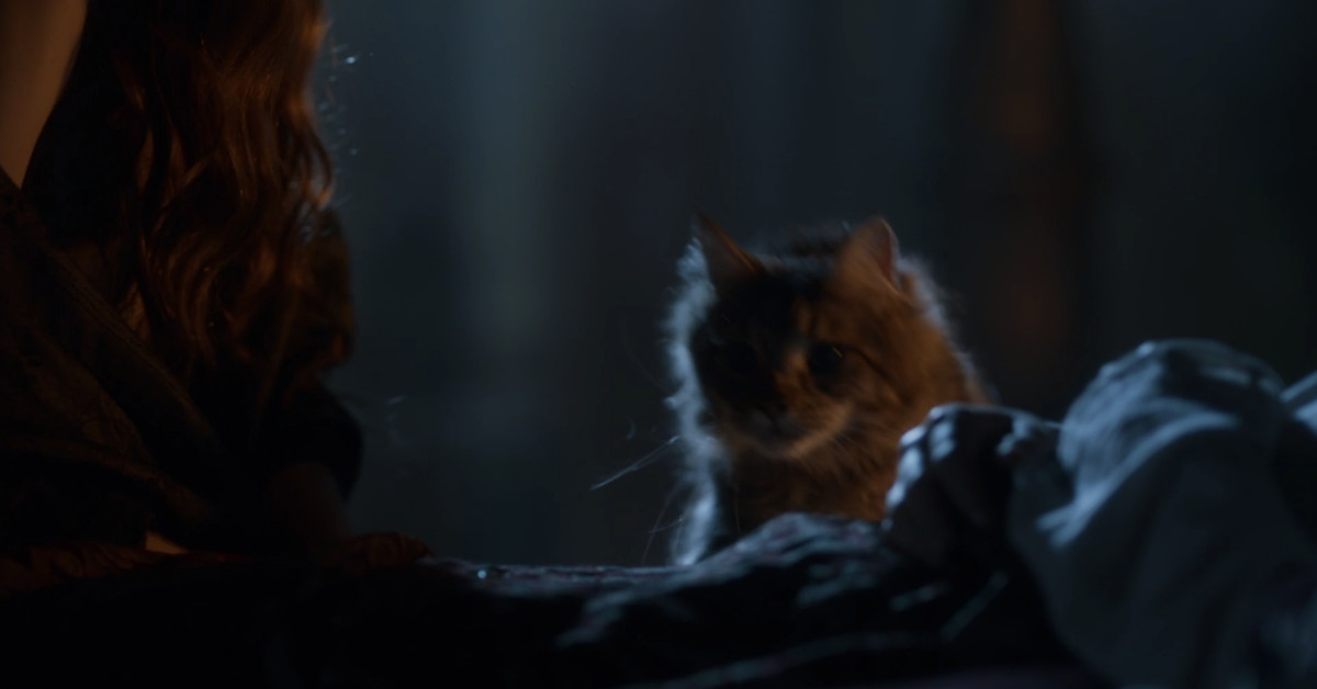 photo image Ser Pounce, Game of Thrones' beloved fan-favorite cat, was killed off-screen