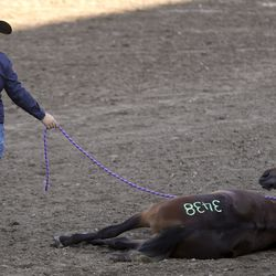 Sarah Phillips has her mustang, WFR Good Lil Mare, lie down as they compete in the 2019 Youth and Military Mustang Trail Challenge at the Days of '47 Arena at the Utah State Fairpark in Salt Lake City on Saturday, Sept. 7, 2019. The Bureau of Land Management and Utah 4-H have partnered for the challenge where youth and veterans choose a wild mustang and have approximately 100 days to turn it into a gentle, adoptable equine companion.