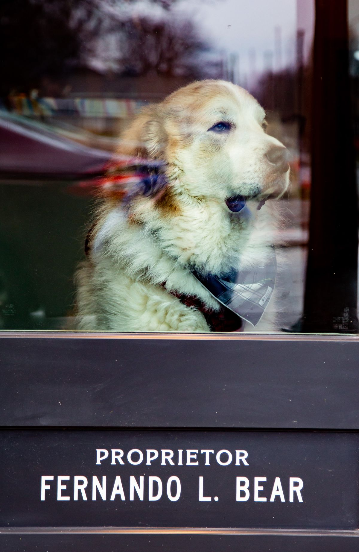 A shot of Fernando L. Bear the dog looking out of the front door window at Little Bear in Summerhill
