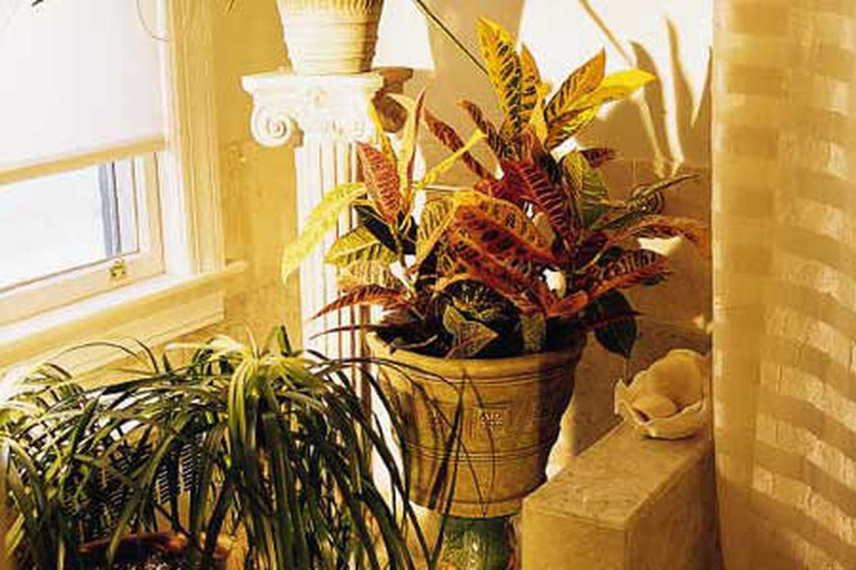 Houseplants For People Who Can T Grow Houseplants This Old House
