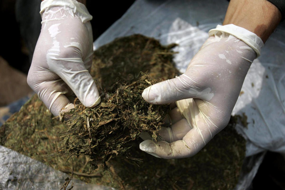 File - In this June 3, 2009 file photo, a police officer unpacks marijuana in Cali, Colombia.  The Spanish village of Rasquera, Spain, is voting in a regional referendum to decide if to allow the cultivation of  marijuana as a source of revenue to pay off