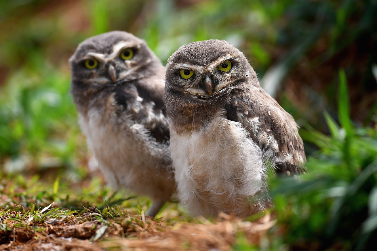 test your animal knowledge with these challenges on twitter