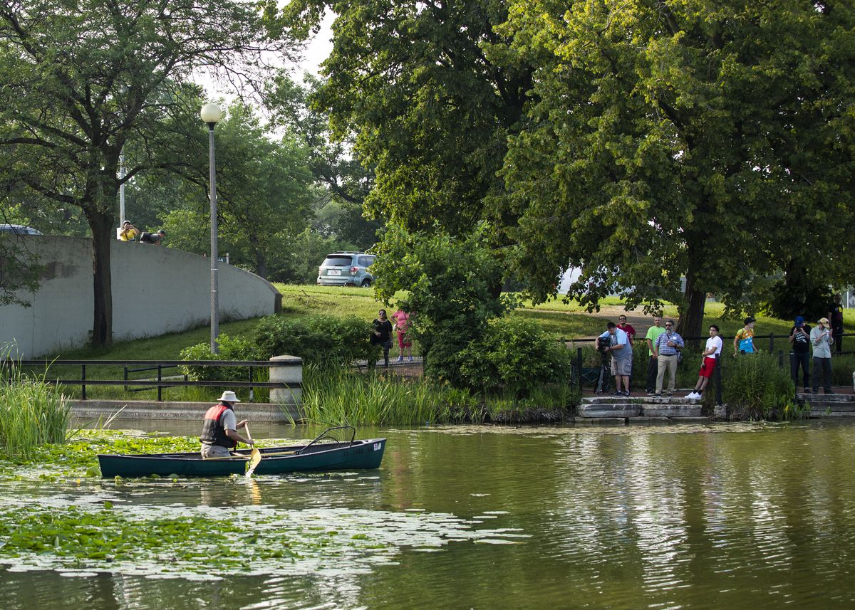 People watch on from the shore as authorities search for a loose alligator in the Humboldt Park Lagoon.
