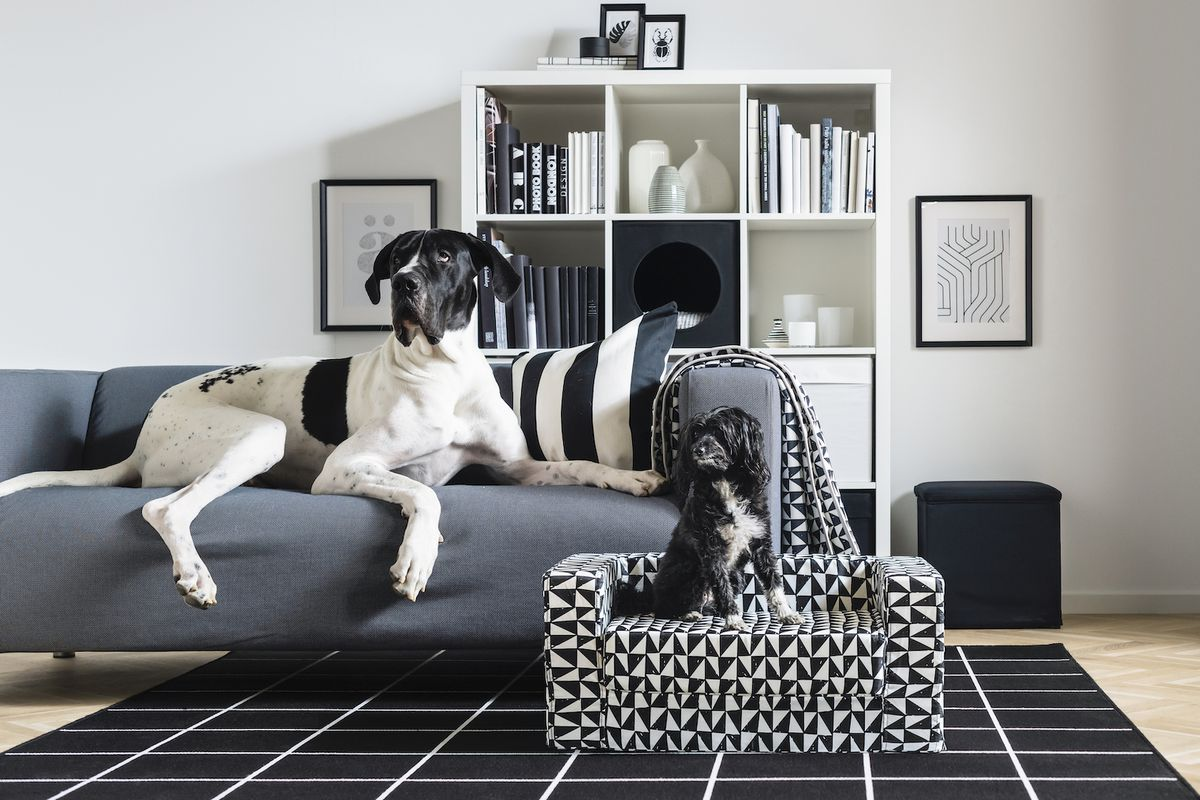 One dog on a gray couch, another on a black-and-white patterned dog bed.