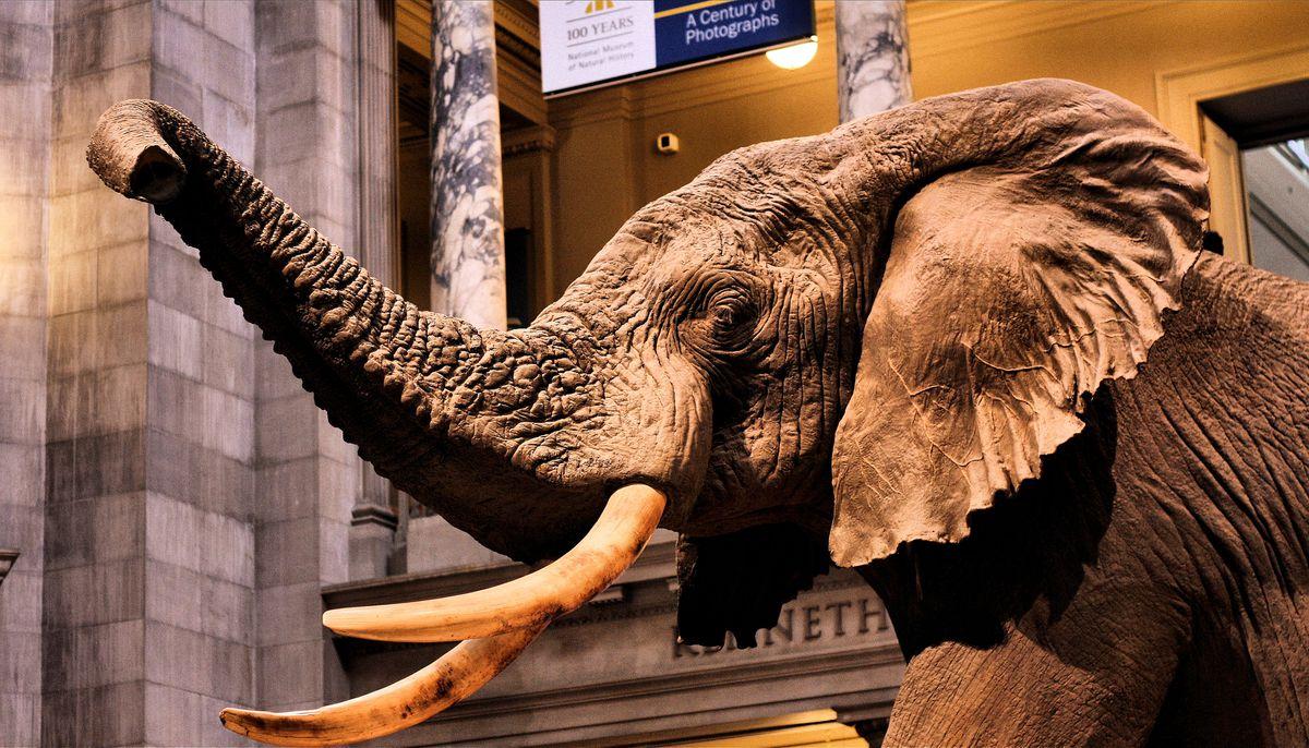 nmnh rotunda elephant 2