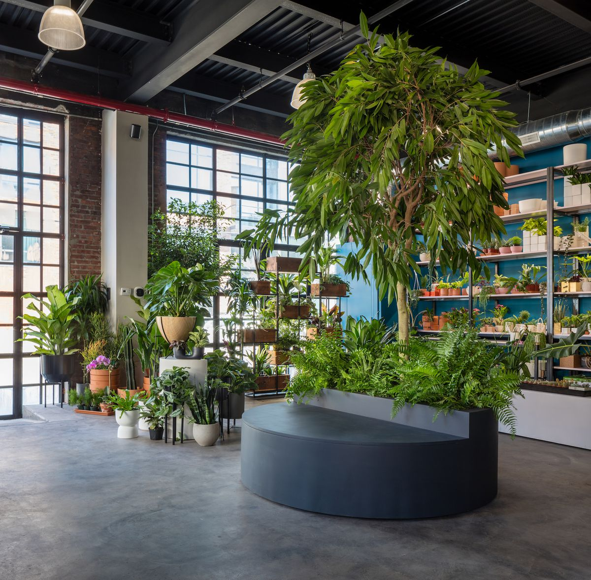 Store with lots of plants