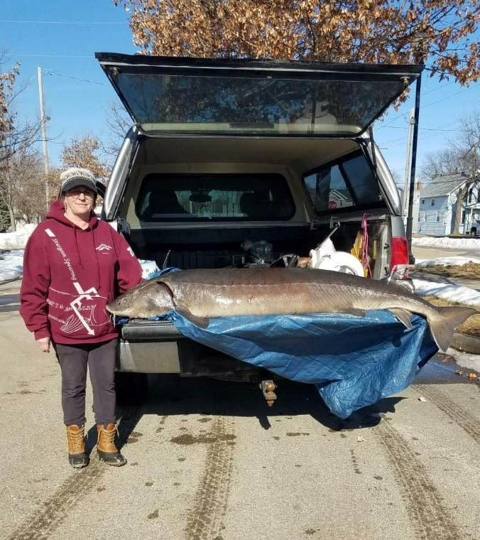 Lana Freiberg speared this 157.8-pound (78.3 inches) F4 female lake sturgeon on day eight of the 2021 spearing season. / Photo credit: Wisconsin DNR