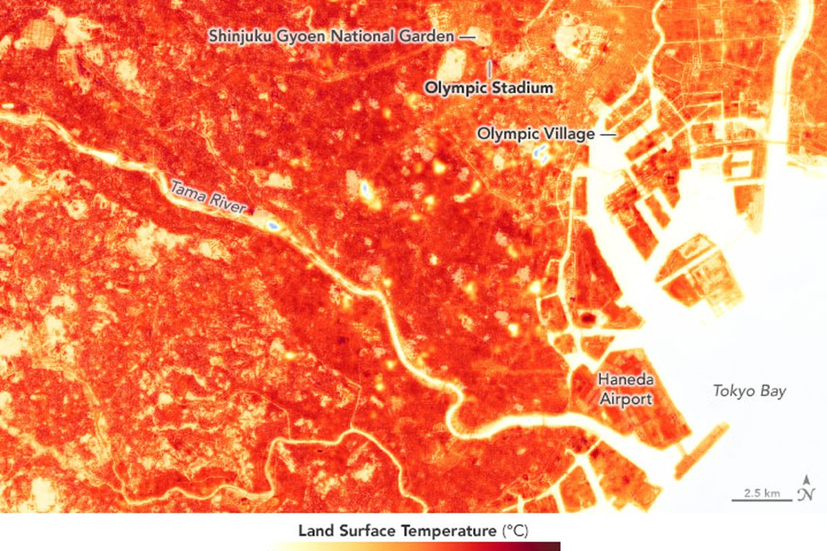 Land surface temperatures in Tokyo show that it's an urban heat island.