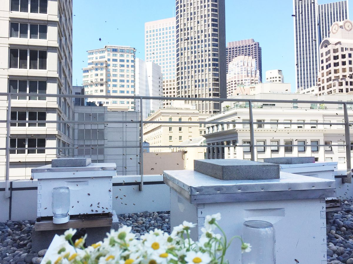 The St Regis San Francisco