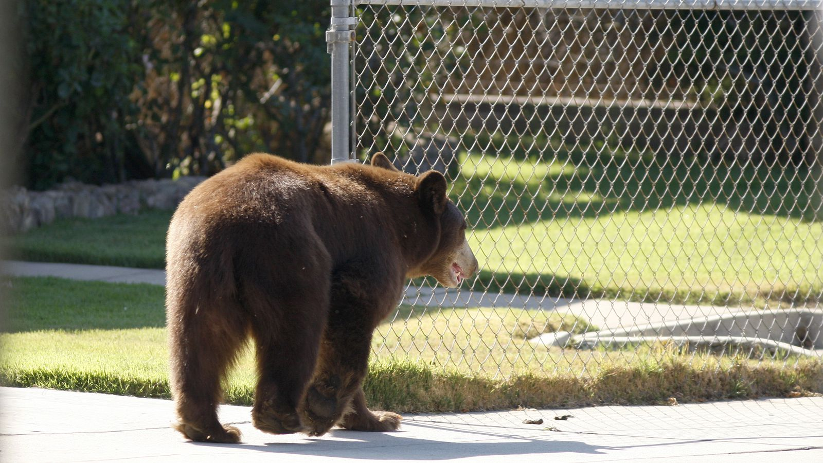 watch woman yell u0027bear don u0027t eat my kayak u0027 as bear eats kayak
