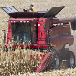 John Lamprecht of the Lamprecht Bros., left, harvests corn in Waterloo, Neb., Wednesday, Sept. 19, 2012, with his brother Byron sitting on the right. The Lamprecht brothers bought their combine in 2011, a bumper year for agriculture. The Census bureau is releasing new figures showing that Nebraska and Iowa's median income rose in 2011 compared to other states. A good year in agriculture is thought to be the reason.