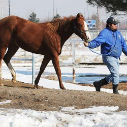 Arturo Rodrigez walks a horse from a powered walker at the Salt Lake County Equestrian Park and Event Center in South Jordan on Monday, Feb. 8, 2016.