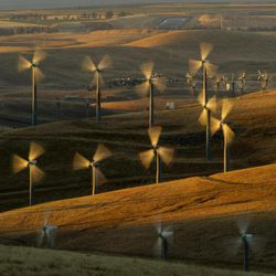 Wind turbines lining the Altamont Pass near Livermore, Calif., generate electricity on Sunday, May 12, 2013. It's the not-so-green secret of the nation's wind-energy boom: Spinning turbines are killing thousands of federally protected birds, including eagles, each year.