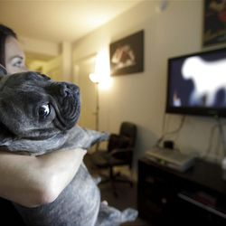 In this April 7, 2012 picture, Bleu, a French bulldog owned by Maria Catania, left, watches DogTV in her apartment in San Diego. One million subscribers with two cable companies have access to DogTV in San Diego,  an 8-hour block of on-demand, daily cable TV programming designed to keep your dog relaxed, stimulated and exposed to new things while you are at work or school. (AP Photo/Gregory Bull)