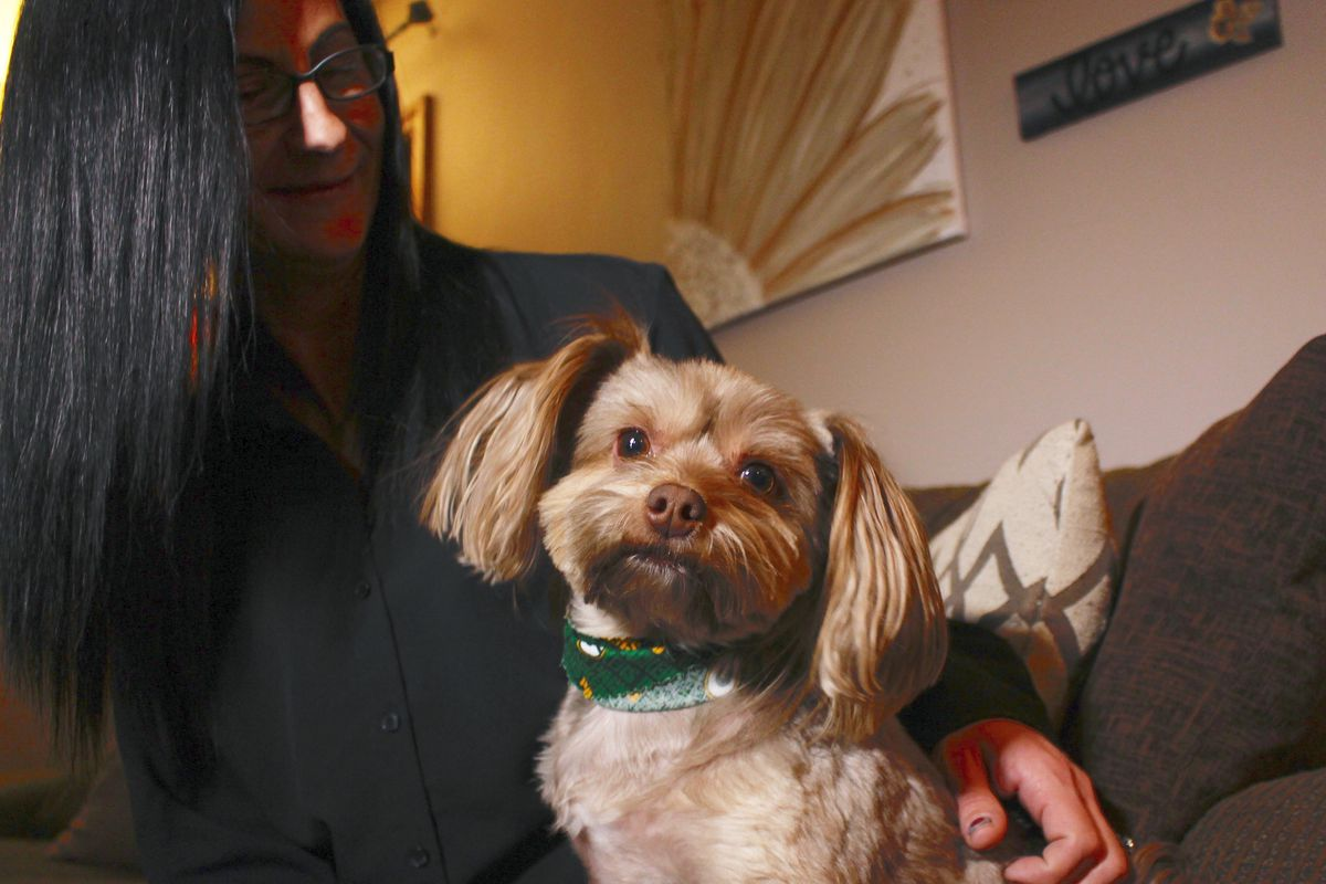 Amy Carter looks at her Yorkshire terrier-Chihuahua mix Bentley, who has epilepsy. Carter, gives him CBD, which she says has reduced his seizures.