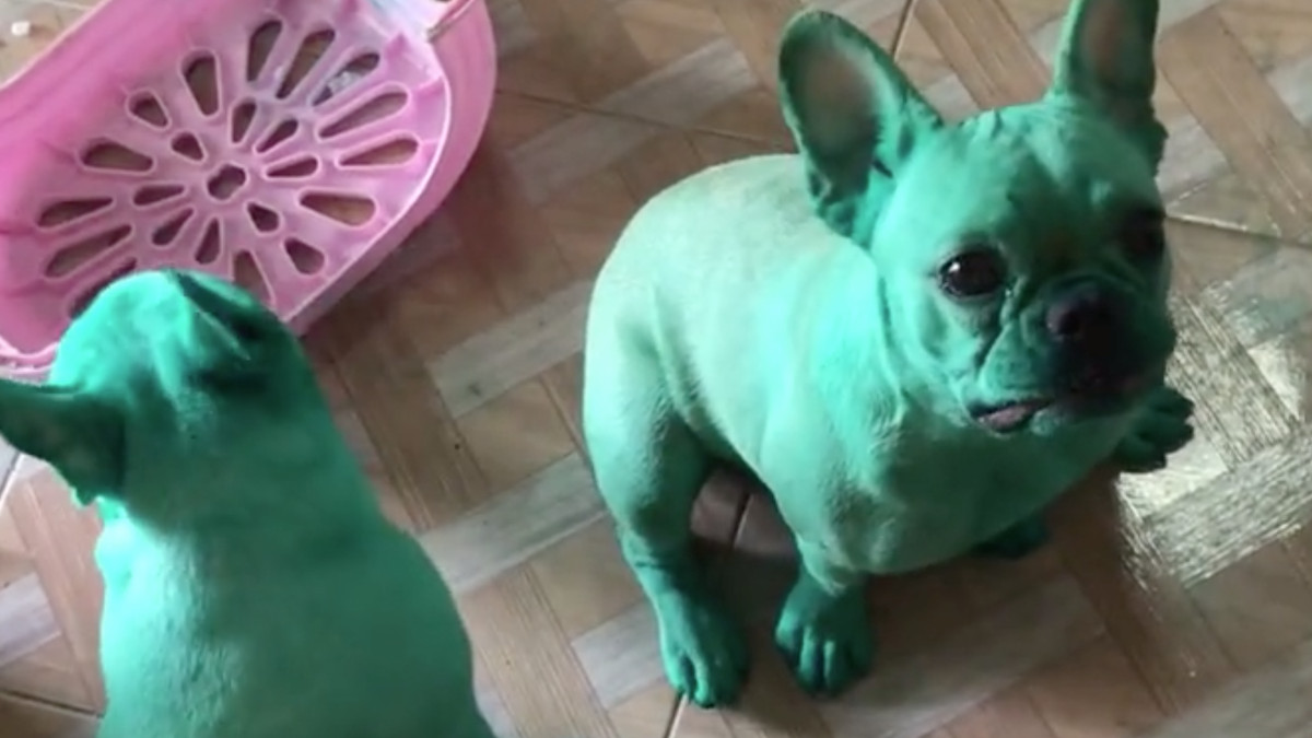 Dogs Break Into Food Coloring, Act Extremely Casual About It ...