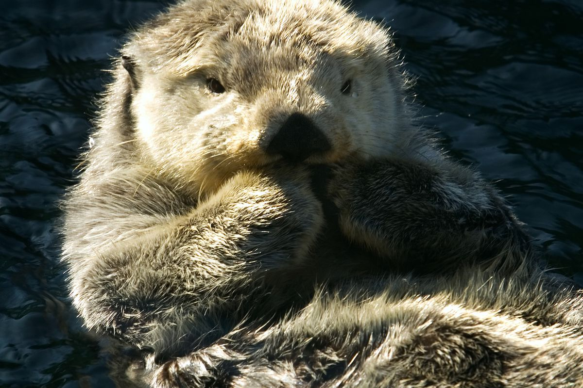 the case against otters necrophiliac serial killing fur monsters