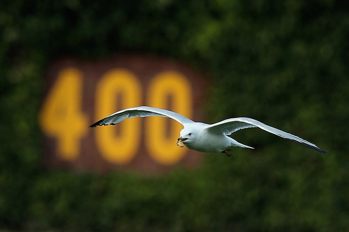 CHICAGO, IL - JUNE 30:  A seagull flies in center field after the Chicago Cubs defeated the Houston Astros 3-2 at Wrigley Field on June 30, 2012 in Chicago, Illinois.  (Photo by Scott Halleran/Getty Images)