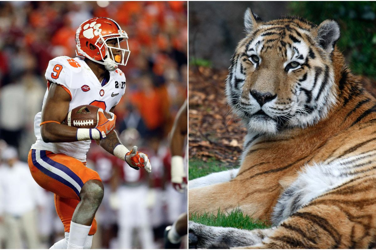 a bunch of colleges with tiger mascots are teaming up to save