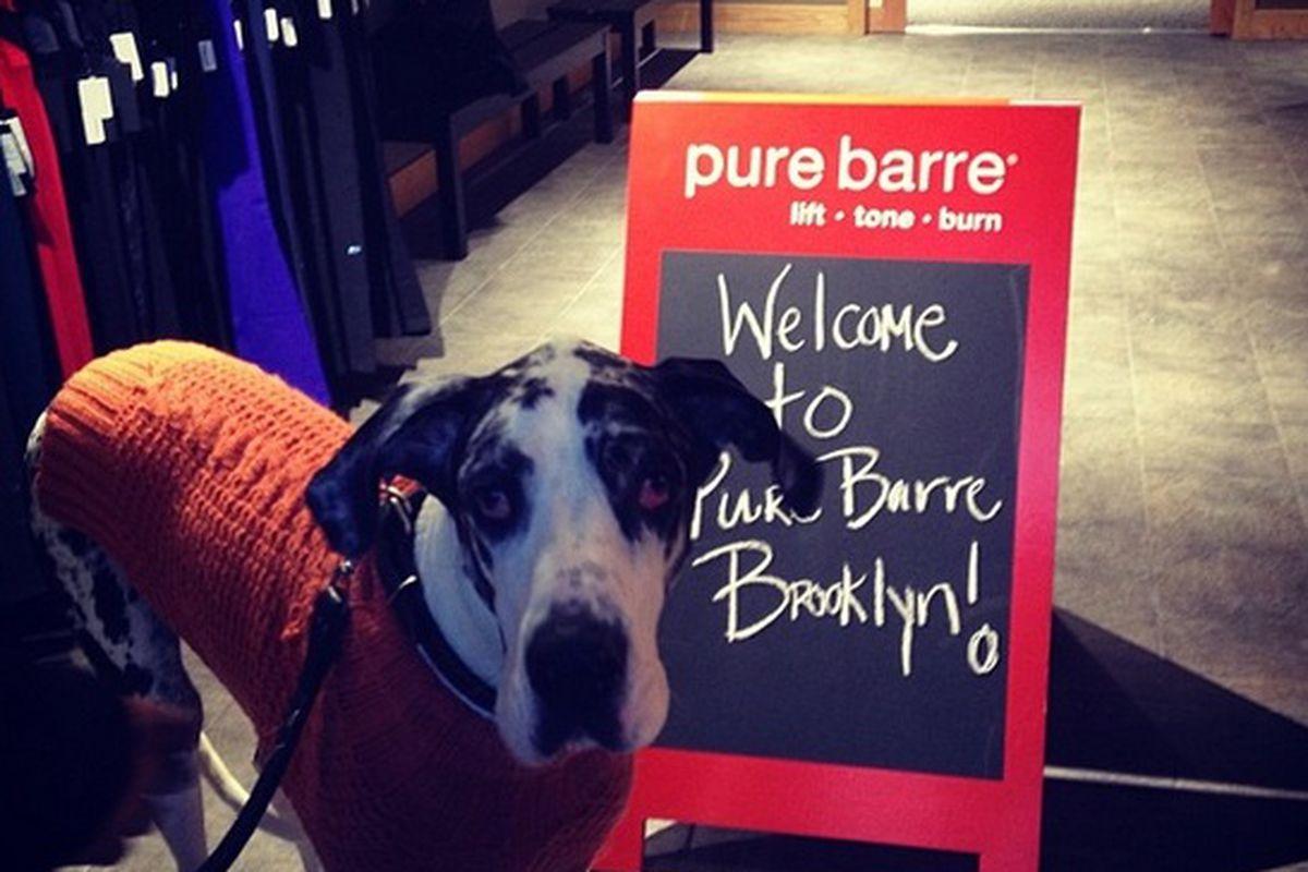 "Photo via <a href=""http://instagram.com/p/hpHuNBmu8a/"">Pure Barre Brooklyn</a>"