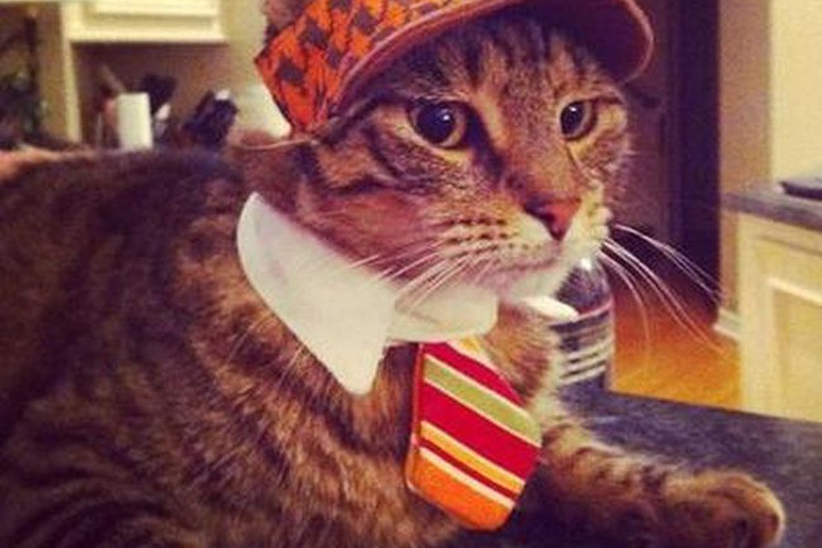 Photo: Rich Cats of Instagram