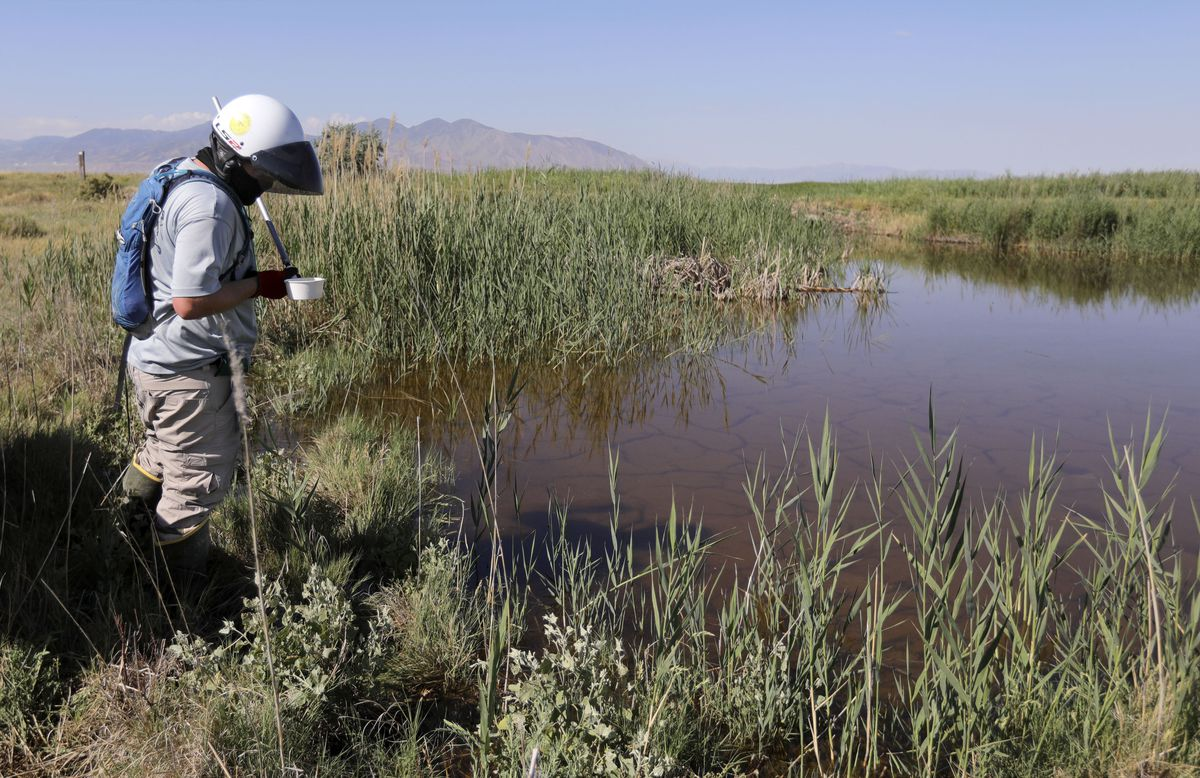 Todd Haskew, Salt Lake City Mosquito Abatement District vector control technician, collects a water sample from a mosquito source, looking for mosquito larvae, in Salt Lake City on Thursday, July 23, 2020.