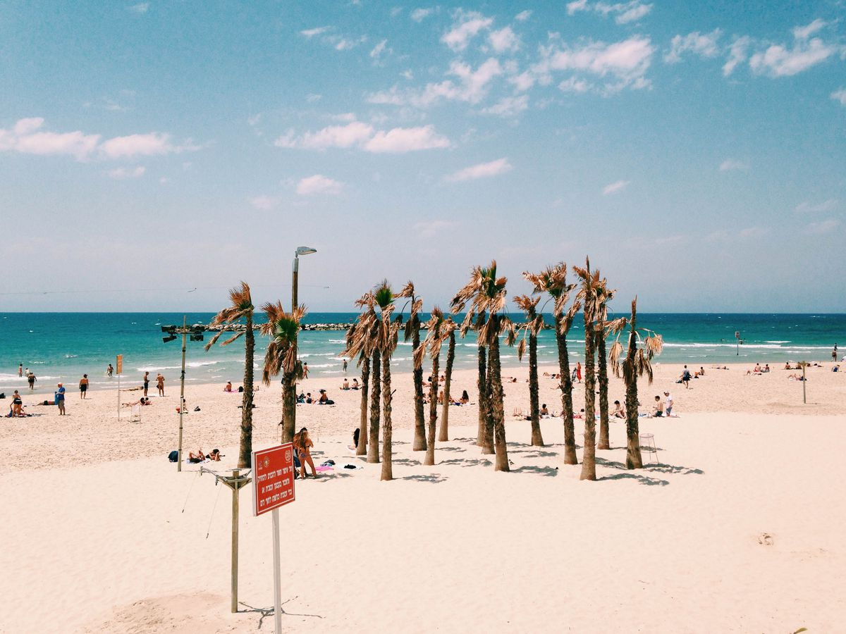 Gordon Beach in Tel Aviv. The beach is sandy with palm trees. In the distance is a body of water.