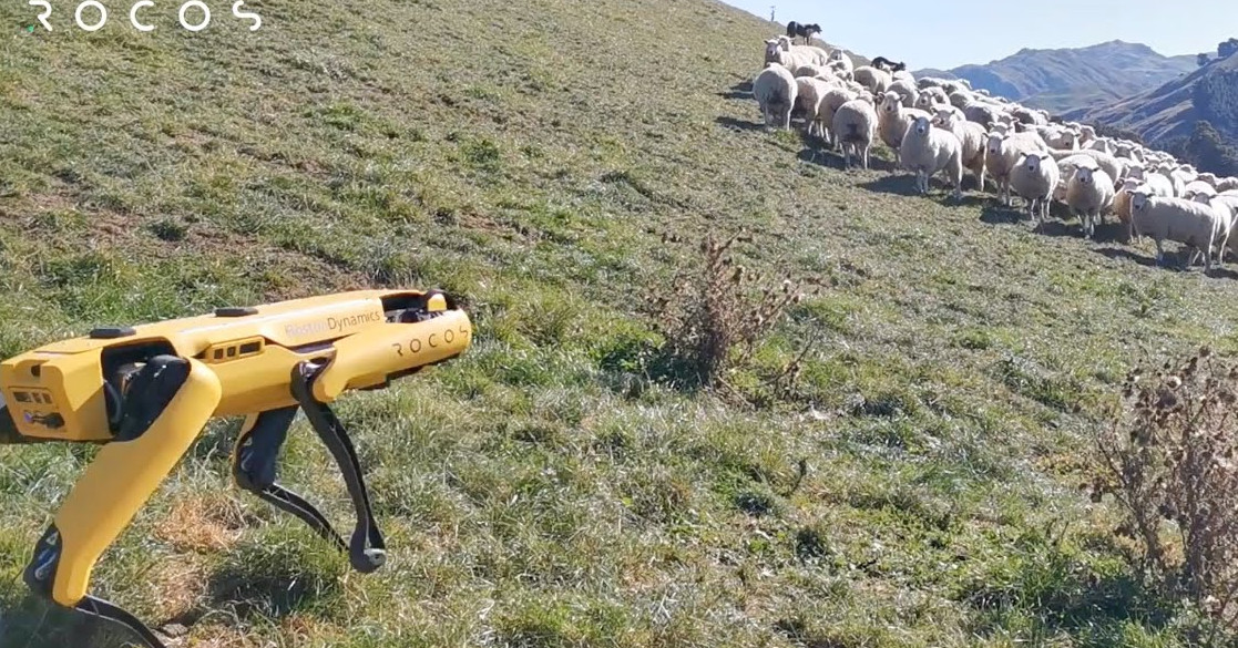 A robot sheepdog? 'No one wants this,' says one shepherd